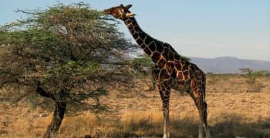 Viajar a Kenia