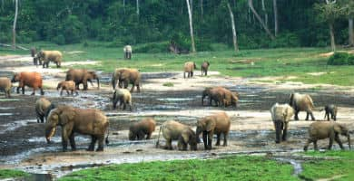 Viajar a la República Centroafricana