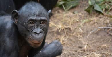 Viajar a la República Democrática del Congo