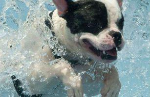 parque acuatico para perros