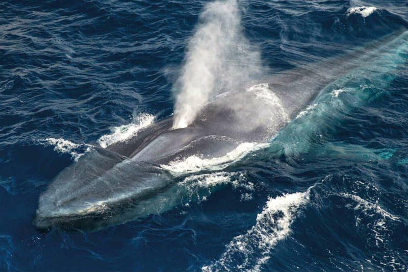 Una ballena en la costa de la isla de Terceira