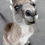 descuento vuelos Australia